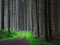 dense-green-forest