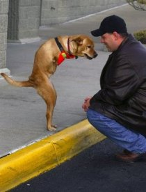faith-dog-and-man-by-curb
