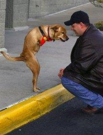 faith-dog-and-man-by-curb