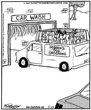 cth-dog-car-wash