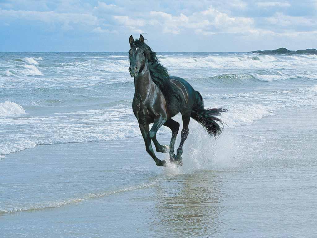 Most Inspiring Wallpaper Horse Spirit - horse-galloping-on-the-ocean-beach  Graphic_997430.jpg