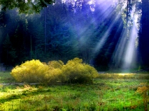 sunbeams-forest