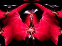 open-heart-art-by-hawk