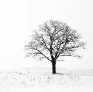 barren-tree-winter