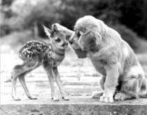 dog-petting-a-doe